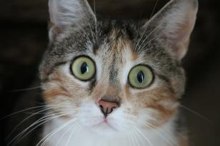 cat-278187_1920