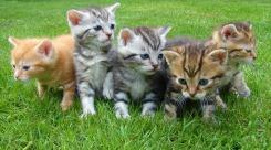 kittens-555822_960_720