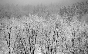 winter-612654__340