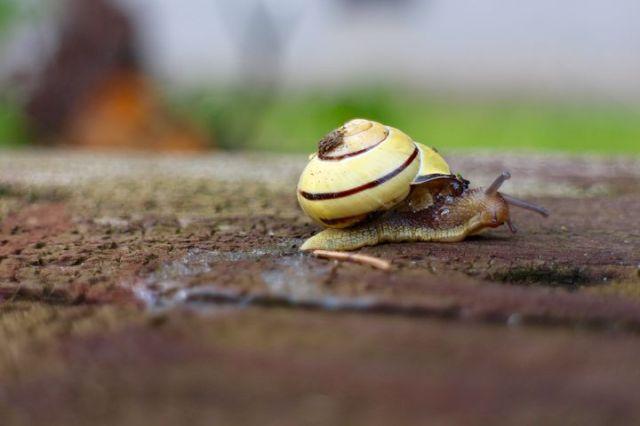snail-1568159__480