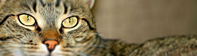 kitten-2899930__480