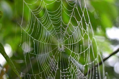 spider-3156844__480